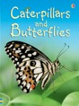 Caterpillars and butterflies