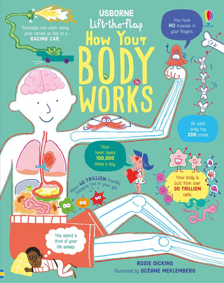 Lift The Flap How Your Body Works At Usborne Children S Books