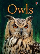 'Owls' book cover