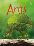 'Ants' book cover